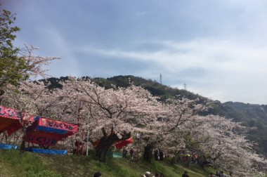 お花見 IN武丈公園