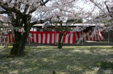 kuraray観桜会♪やっぱりクラレ西条が一番♪
